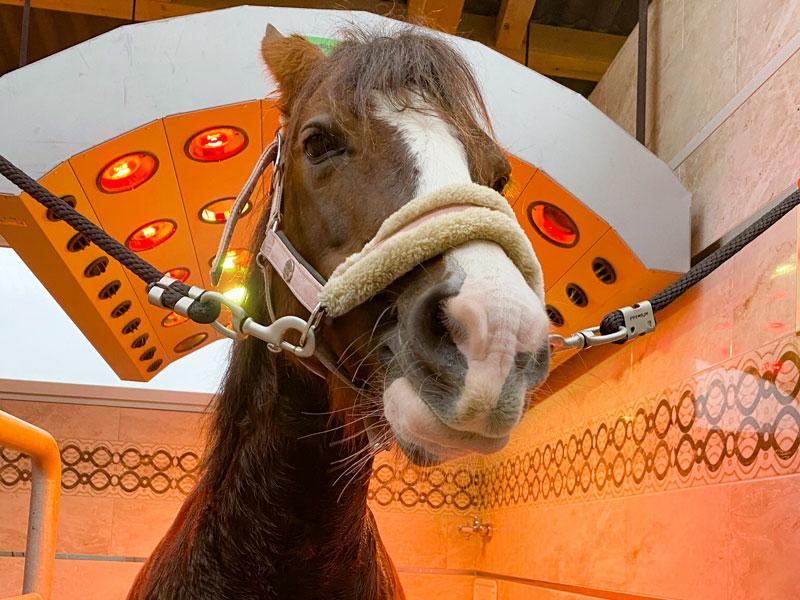 Pferde-Solarium